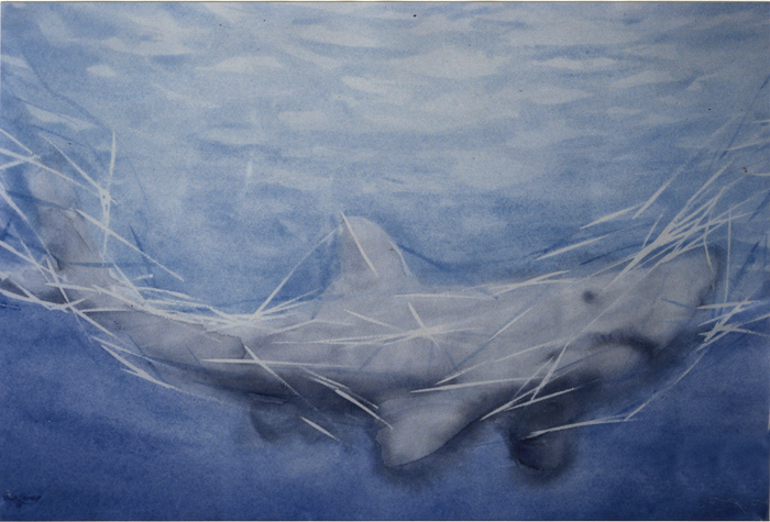 Bernard van Lierop Shark in Gillnet